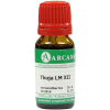 Thuja LM 12 Dilution